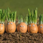 Eggshells Site_S