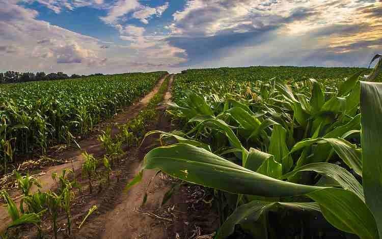 plant biomasss