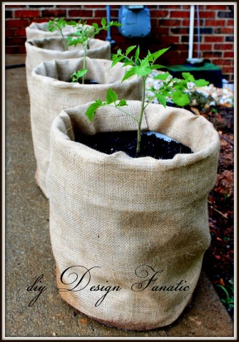 Image Courtesy: http://www.diydesignfanatic.com/2013/06/grow-tomatoes-in-5-gallon-buckets.html