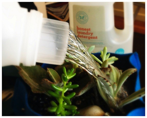 Image Courtesy: https://blog.honest.com/upcycled-laundry-detergent-watering-can/%23
